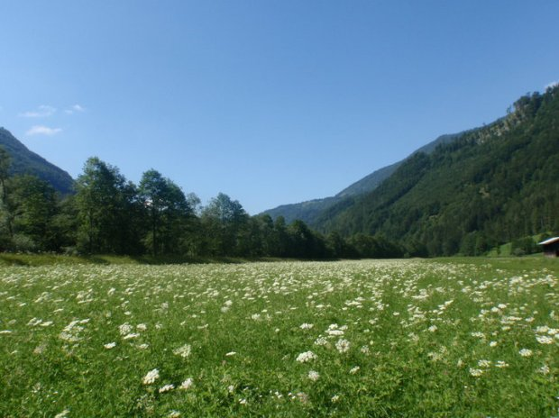 Green meadows
