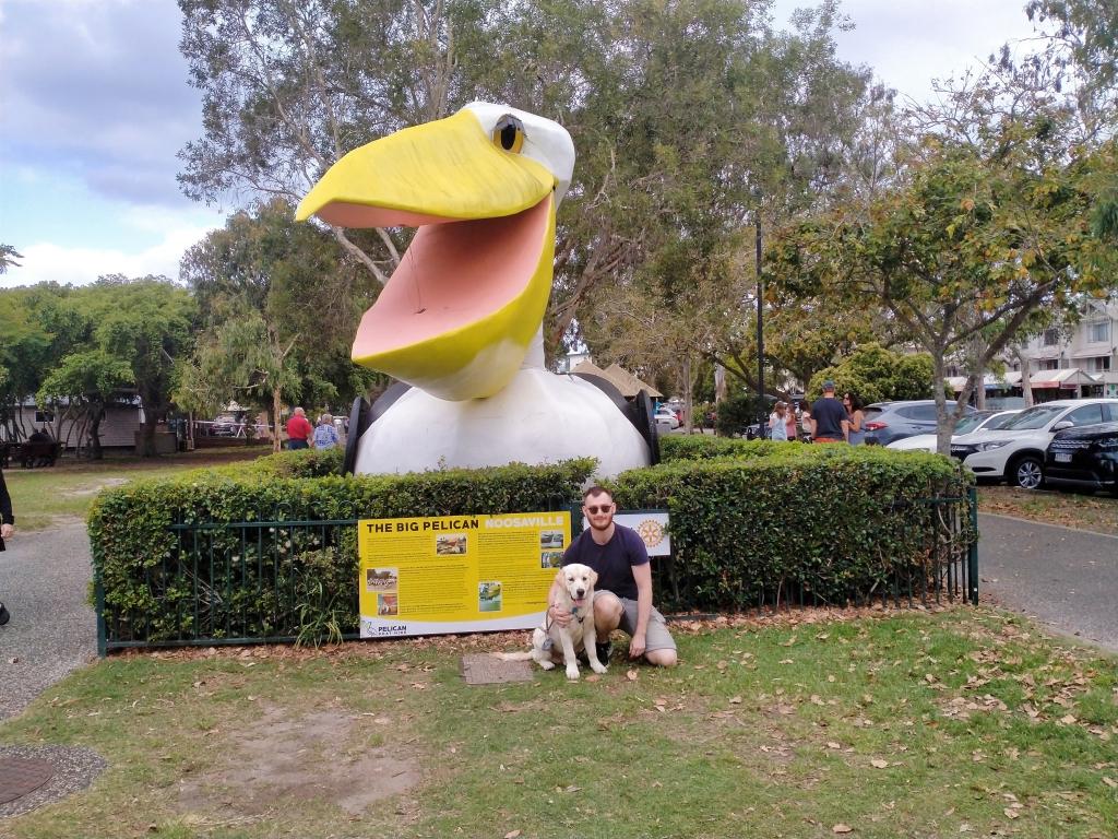 The Big Pelican, Noosa
